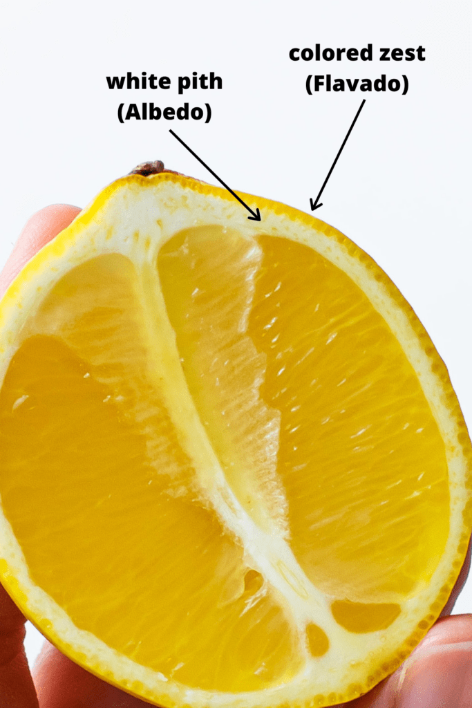 A cross section of a lemon demonstrating the colored zest and the white pith.